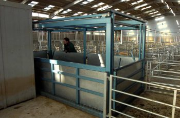 livestock weighing equipment